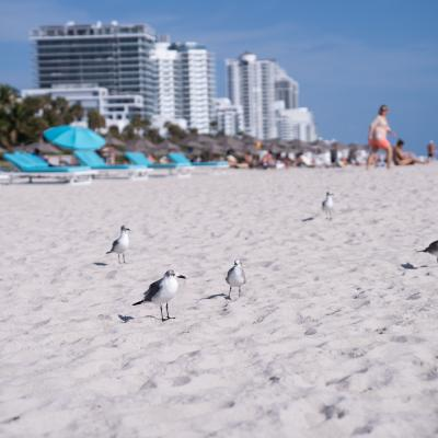 Miami Beach Birds